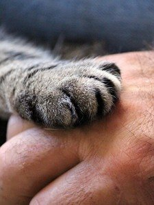 the paw of a cat in a man