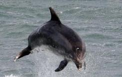 Тайна дельфинов