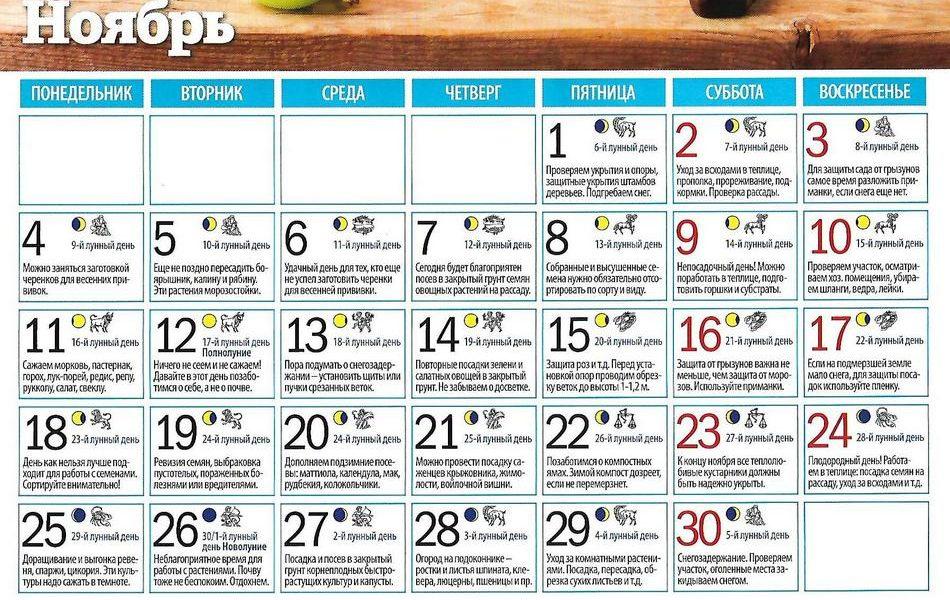 Лунный календарь на ноябрь: Лунный календарь на ноябрь 2019 года
